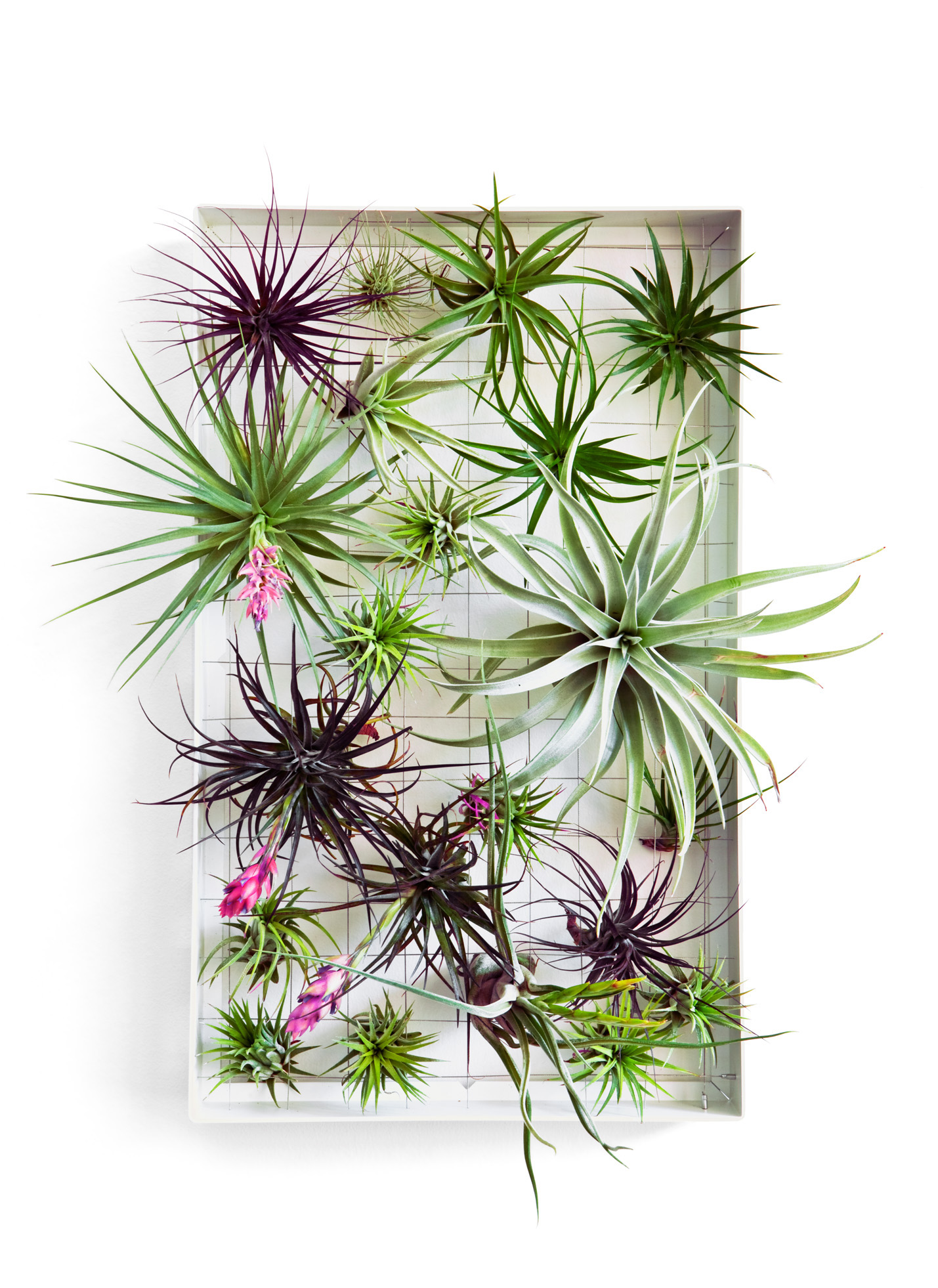 How to Design with Air Plants