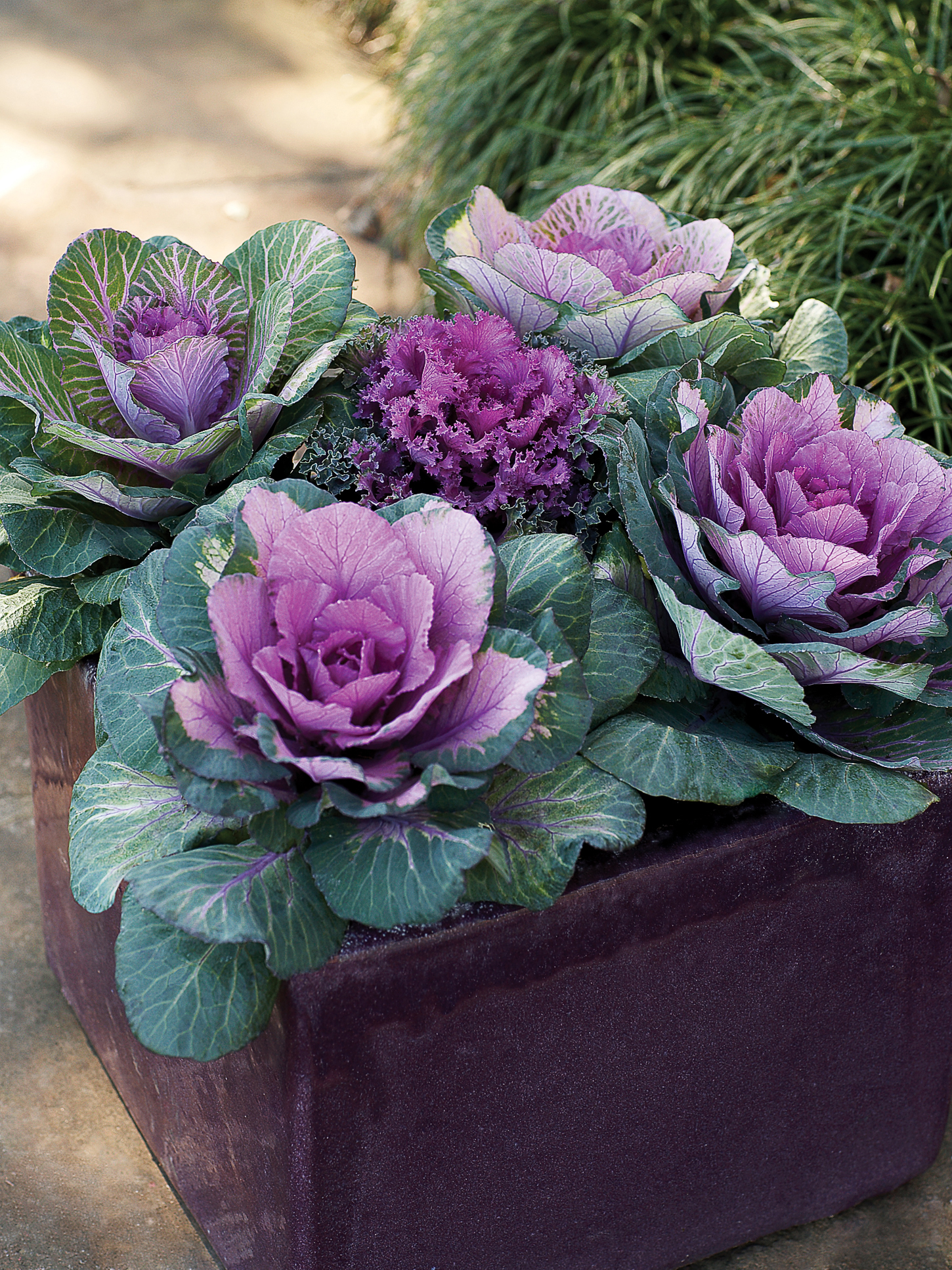 9 Best Plants for Colorful Containers
