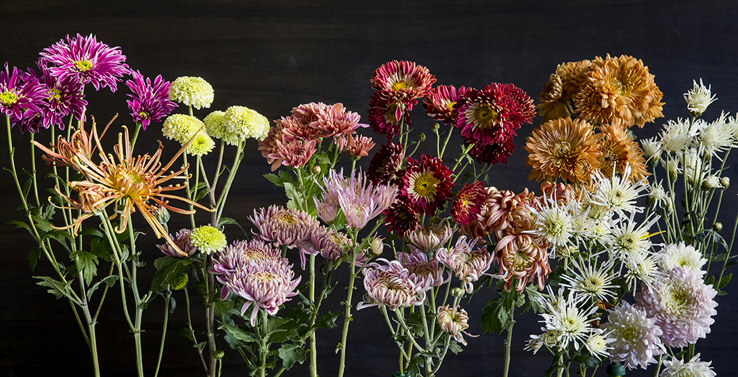 19 Stunning Fall Chrysanthemums