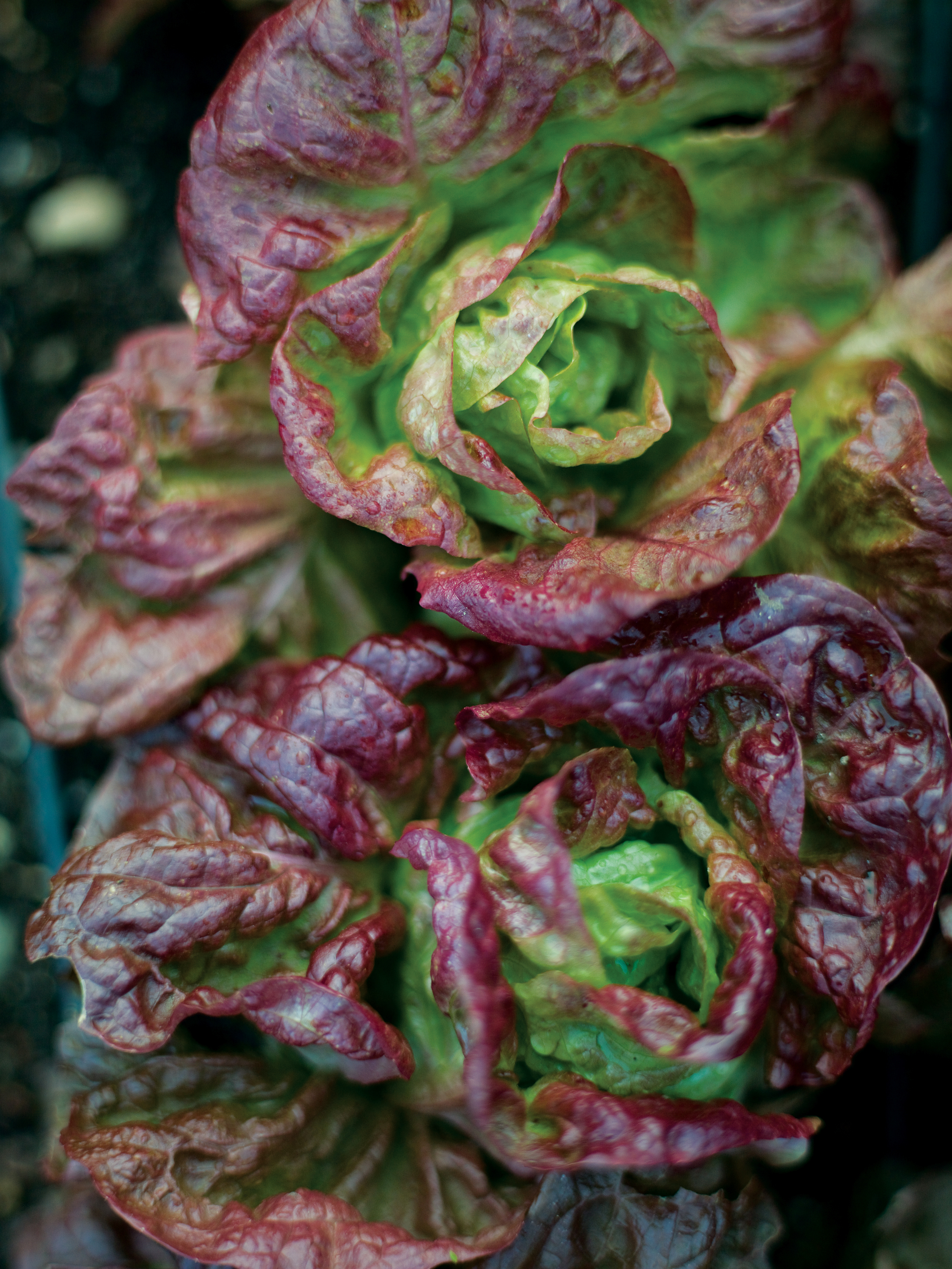10 Easy Edible Plants