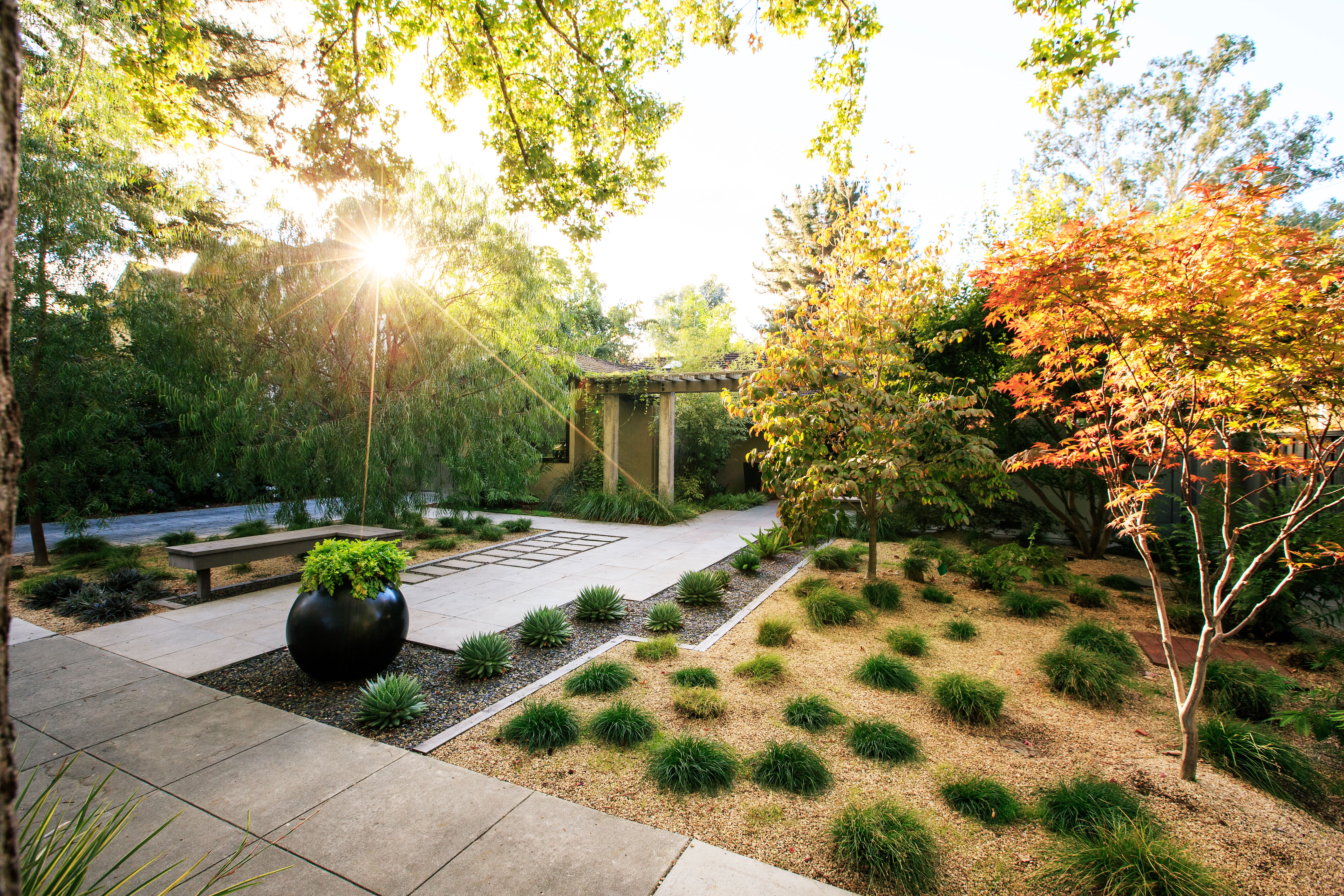 Top 10 Trees for Small Spaces - Sunset Magazine