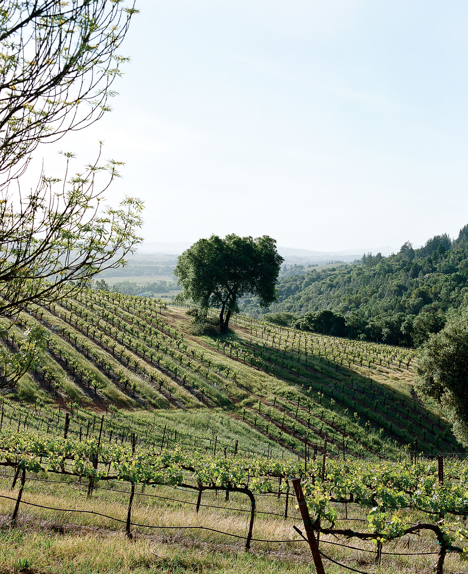 Wine Country Daytrips
