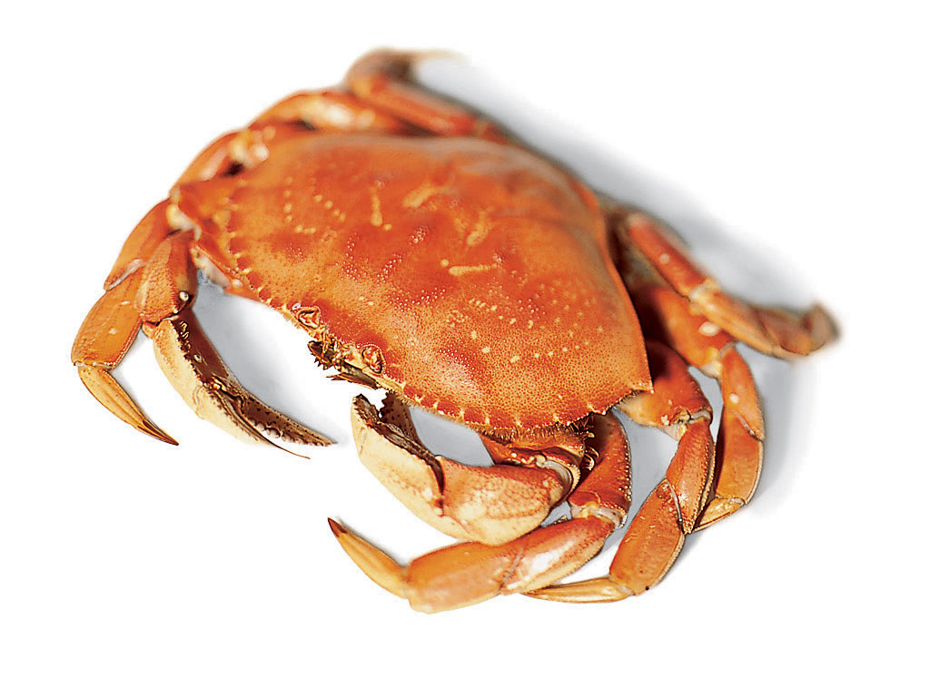 Dungeness 101 How To Cook Crab Sunset Magazine Sunset