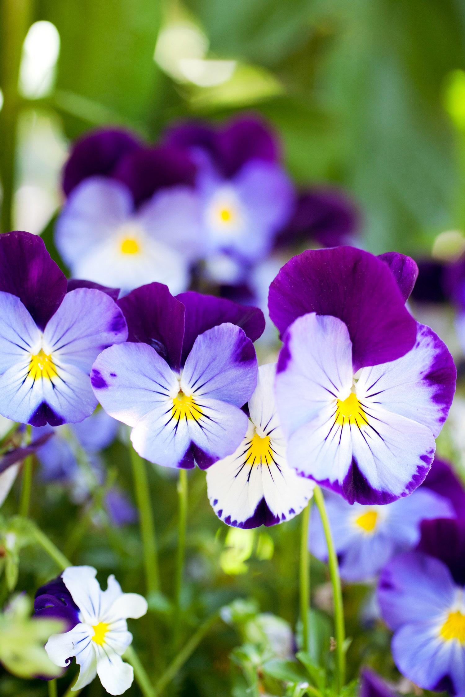 Planting annuals sunset magazine izmirmasajfo Image collections