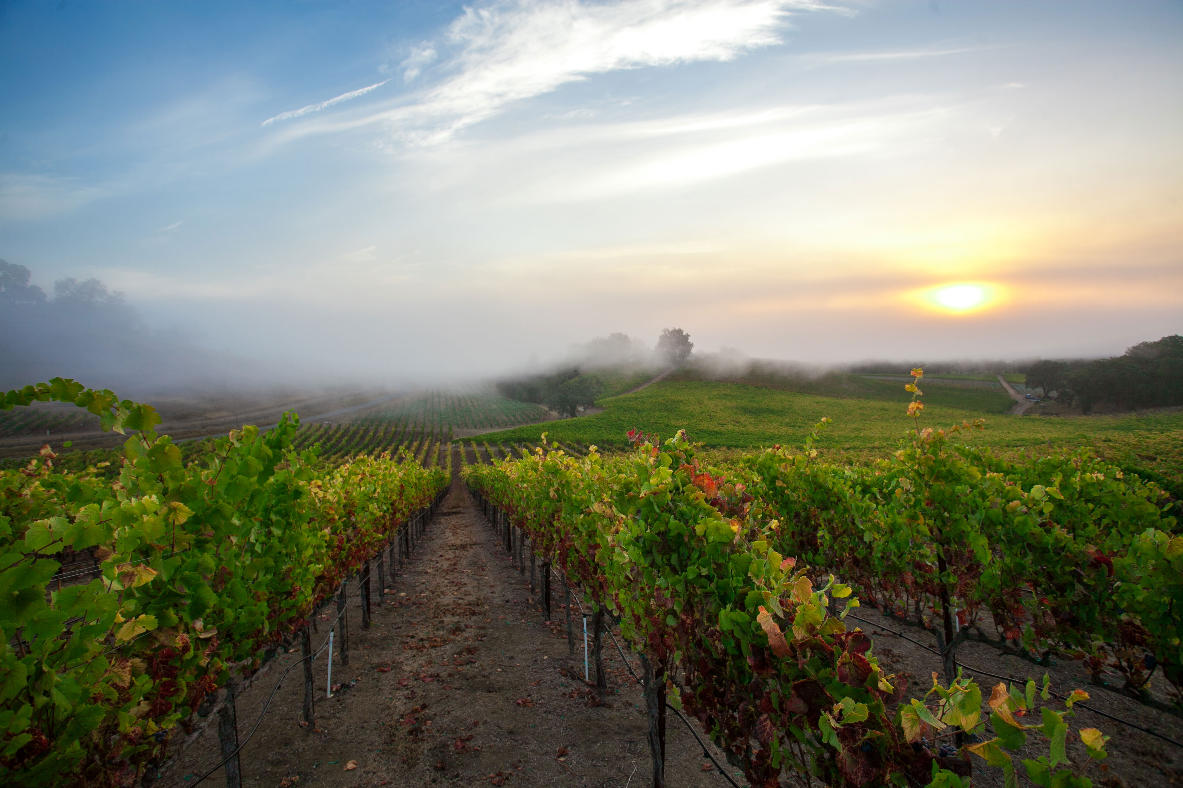 Russian River Valley travel planner