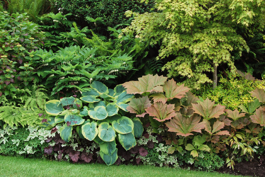 12 Great Foliage Border Plants