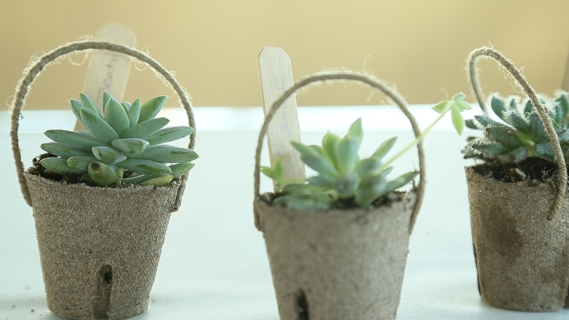 How to Make Mini Easter Succulent Baskets