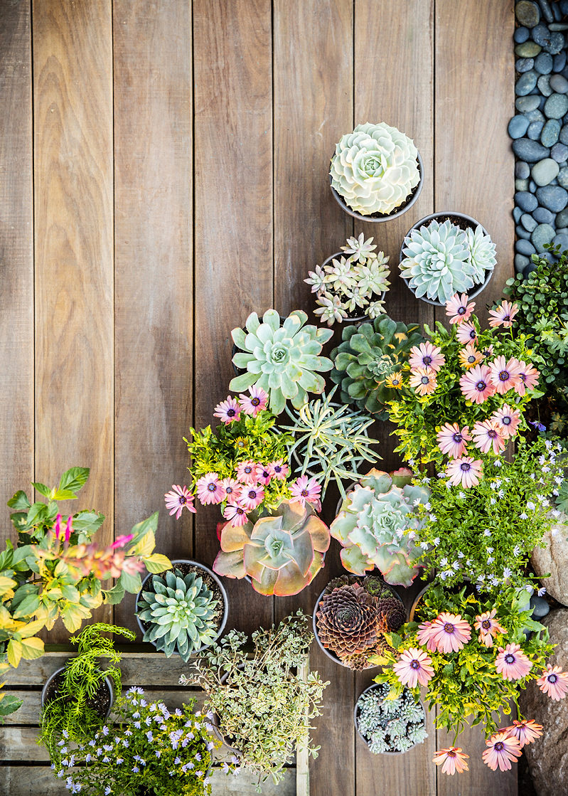 38 Ideas For Succulents In Containers Sunset Magazine