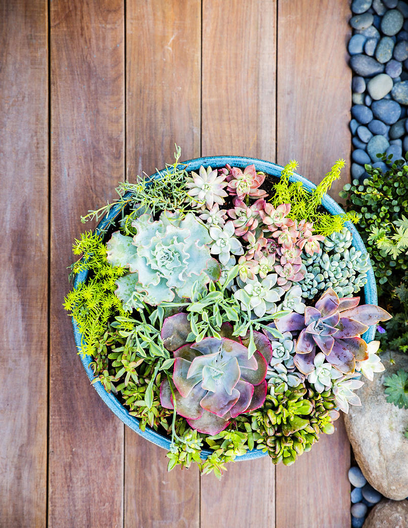 38 Ideas for Succulents in Containers