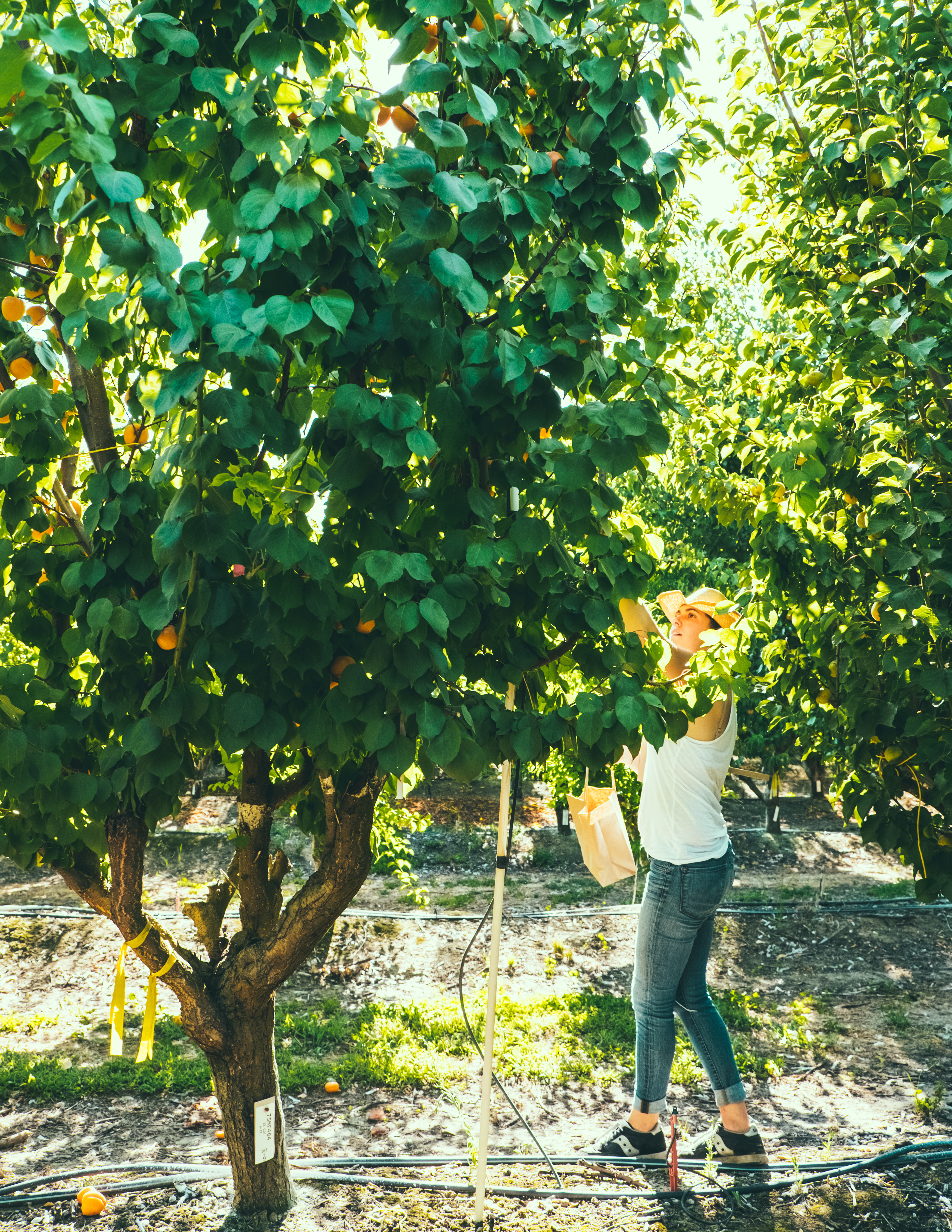 How to grow your own backyard orchard