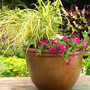 How to plant a container