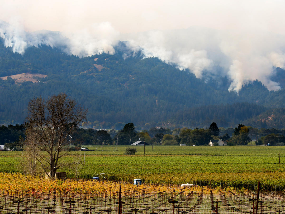 How the Northern California Wildfires Could Change the Wine Industry Forever