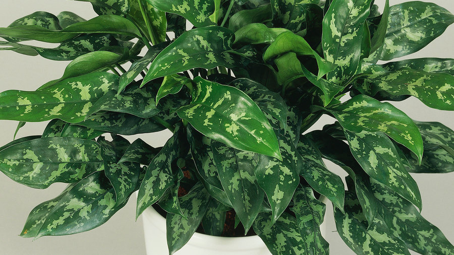 10 Best Houseplants for Low Light