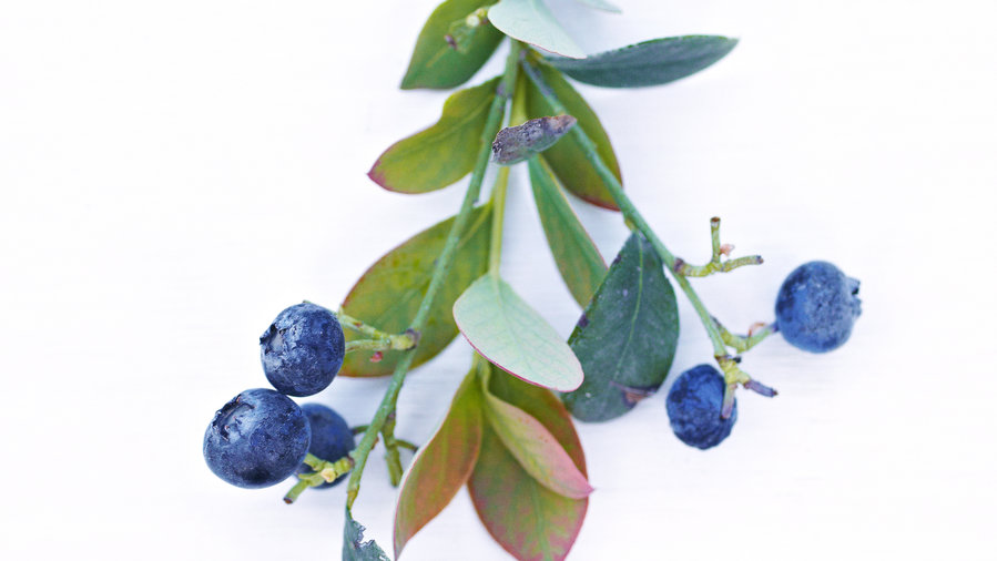 'Jelly Bean' Blueberry