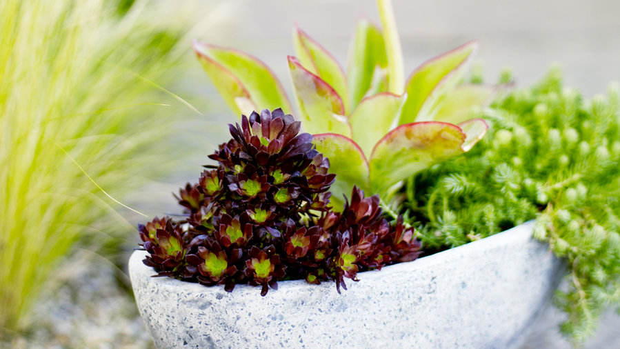 Mini garden in a pot: 3 easy pieces