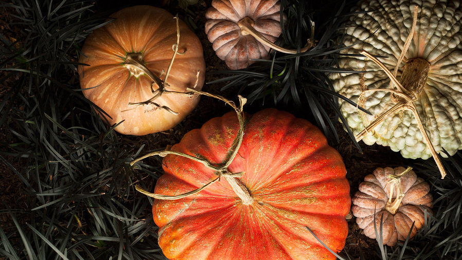5 Unusual Pumpkins for Fall Decorating