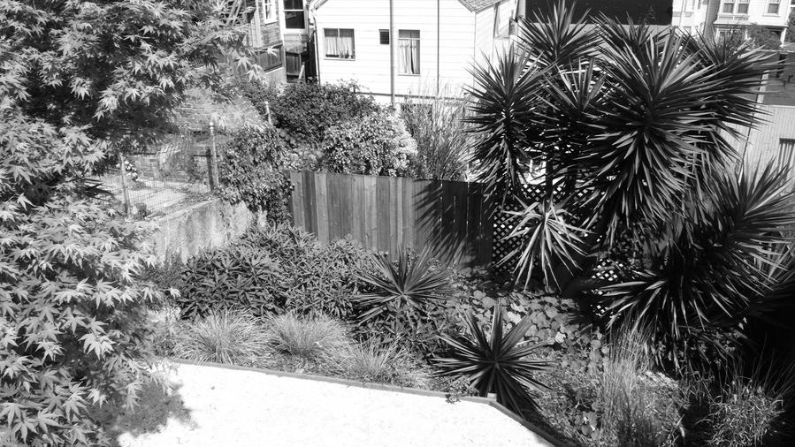 Small Garden Before: San Francisco 1,000 Sq. Ft. Slope