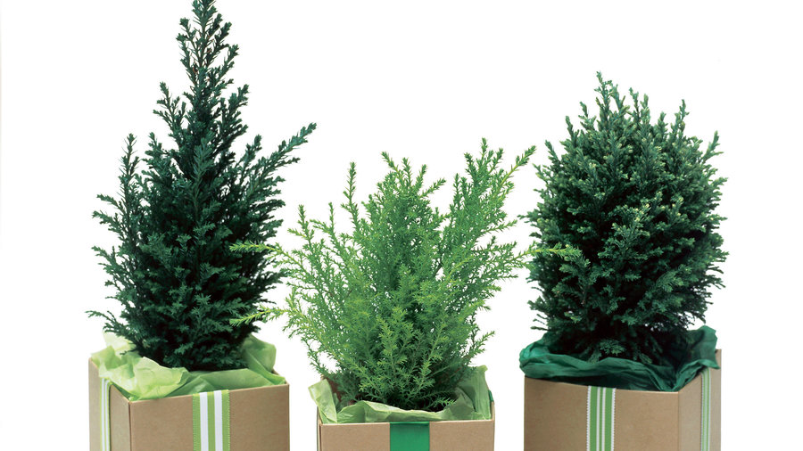 Evergreens gifts