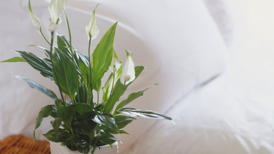 10 Easy Houseplants to Clean the Air and Boost Your Mood