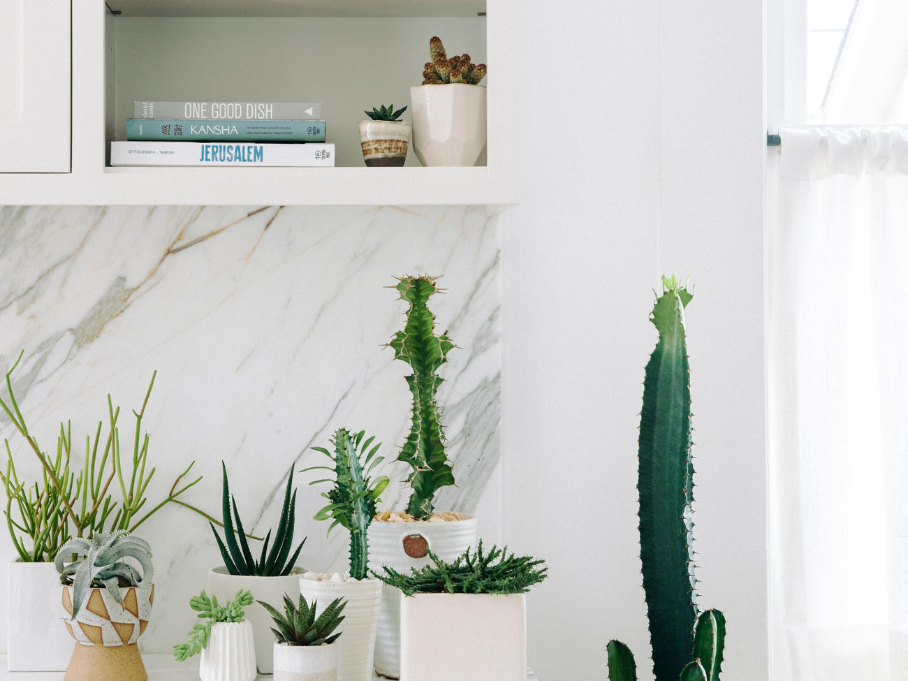 How to Keep Your Houseplants Alive