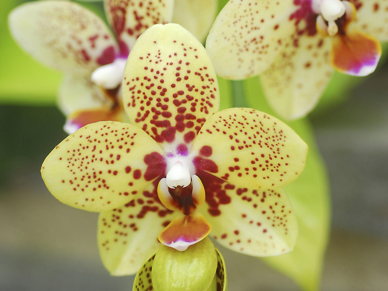 22 Amazingly Easy Orchids