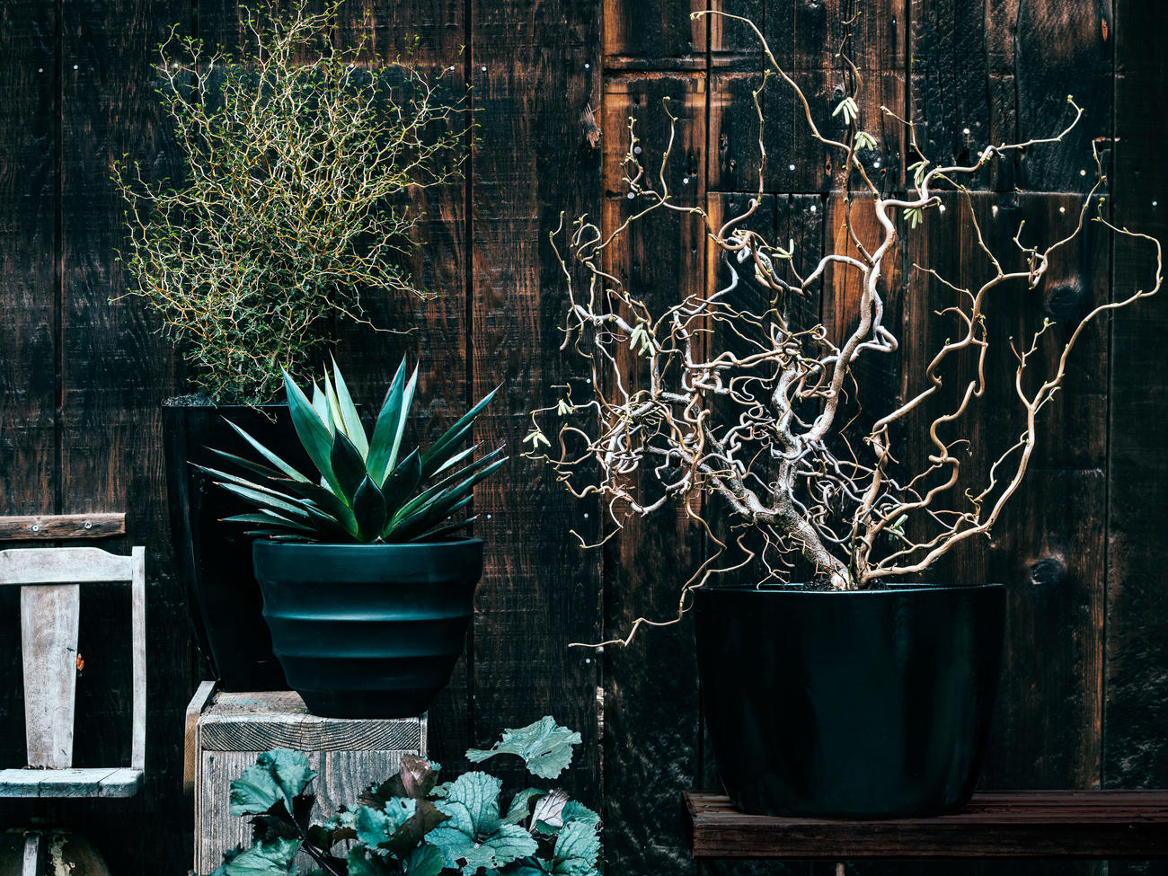 Spooky Plants for Halloween Decorating