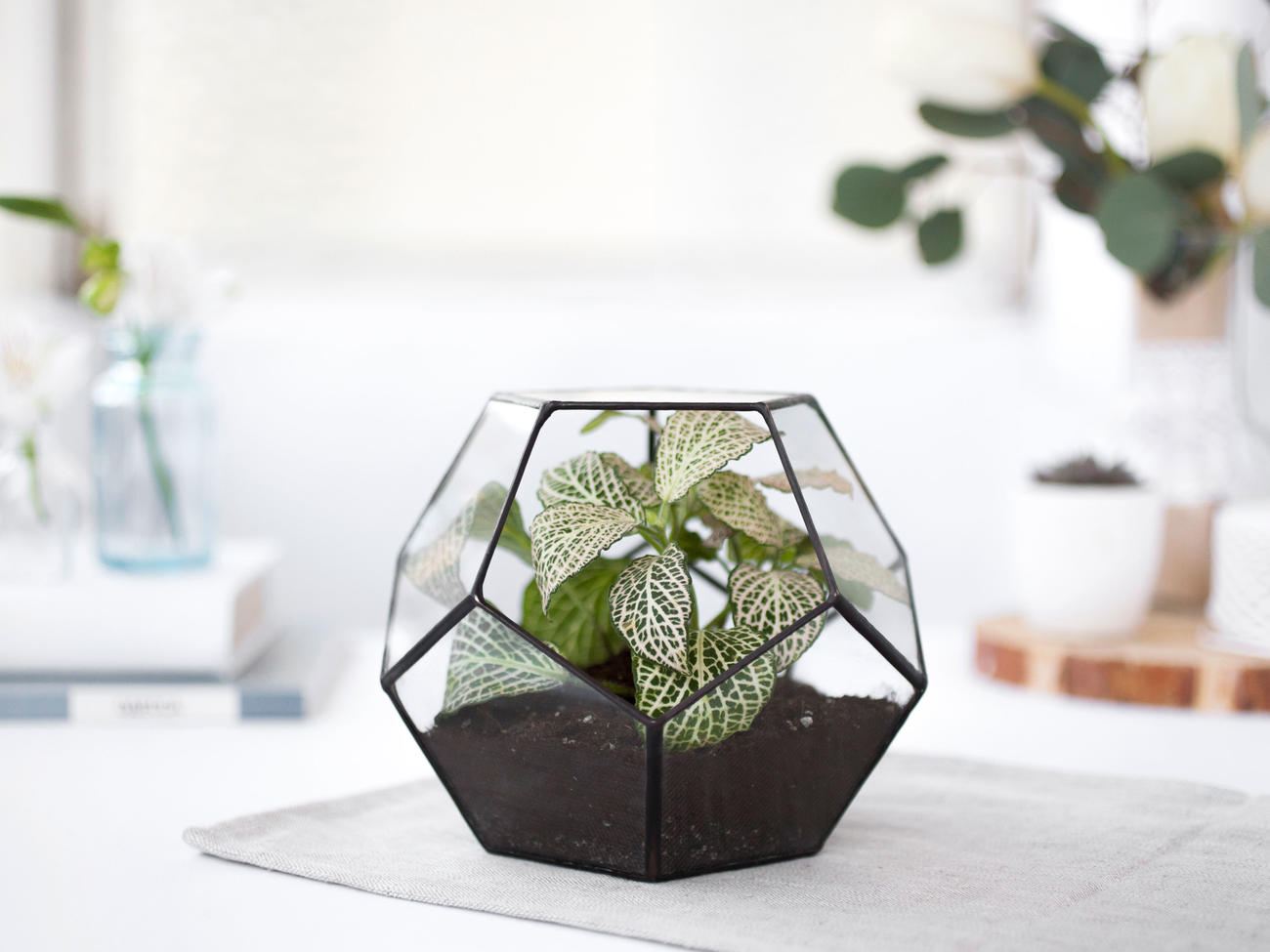 Top 8 Terrarium Plants