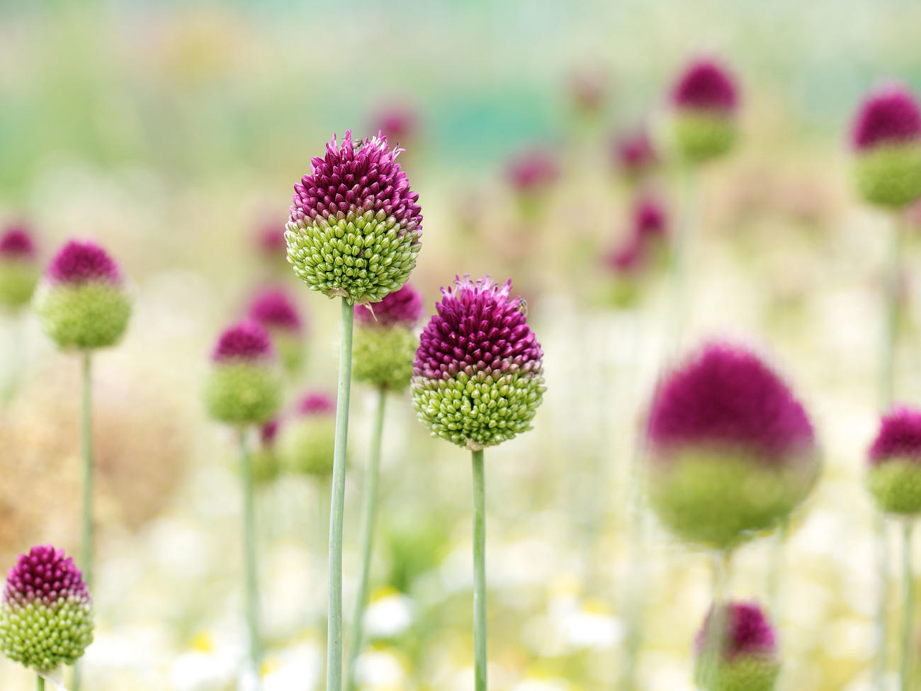 10 Best Flowers to Plant in Fall