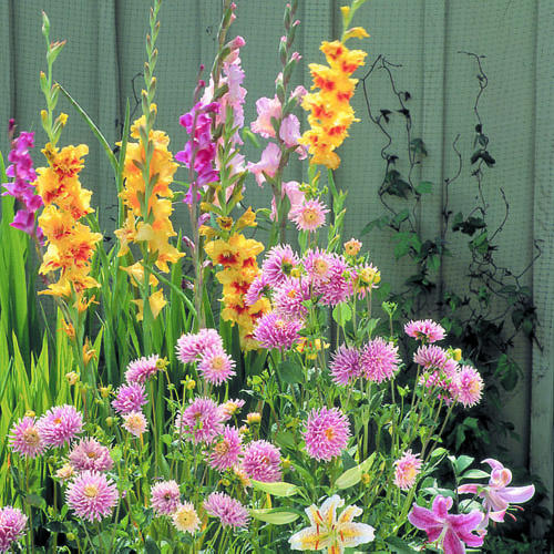 How to plant and care for summer bulbs