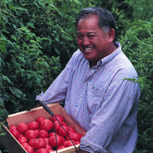 How to Grow Tomatoes: Tips from the Masters