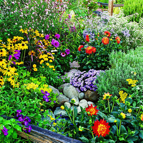 Awesome 9 Easy Summer Flowers