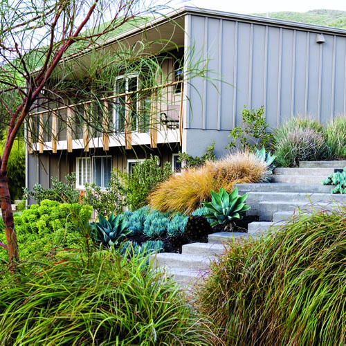 Mid Century Landscaping: Lush Landscaping For A Mid-century Modern Home