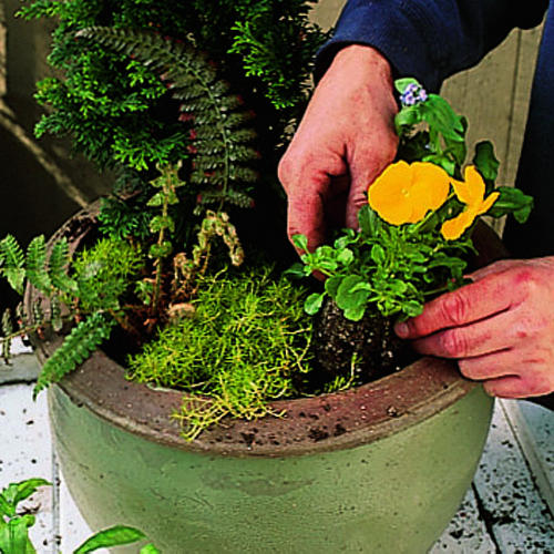 Beautiful container plantings for your deck, entryway, or yard ...
