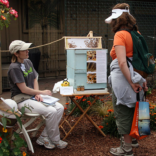 Learning about bees in the test garden