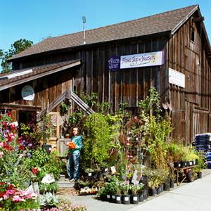 Alena Jean Flower Shop & Nursery