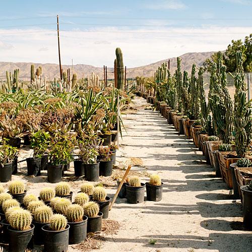 Mariscal Cactus Succulents Sunset