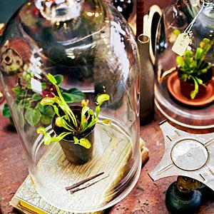 Crimson Horticultural Rarities