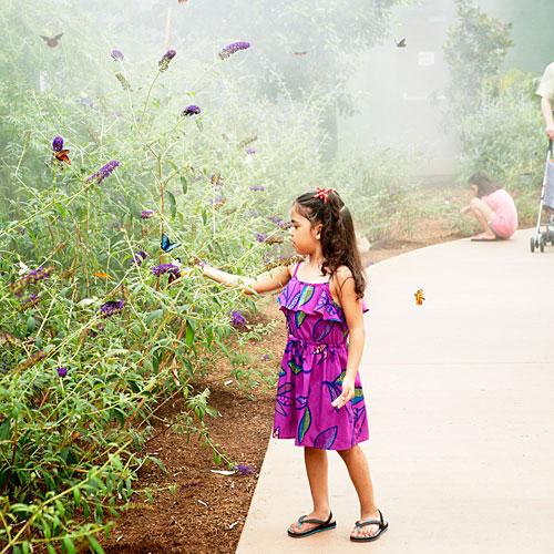 Bon Butterfly Wonderland