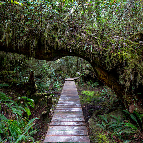 Rainforests of Clayoquot Sound