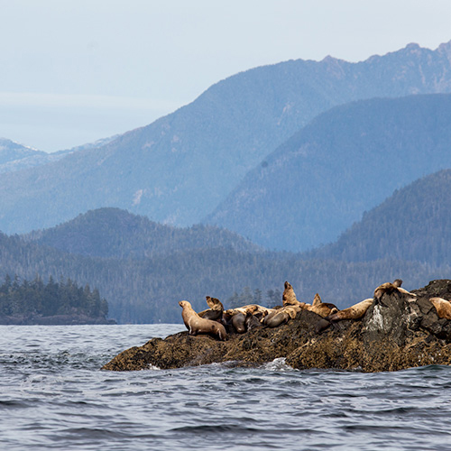 Wildlife of Tofino