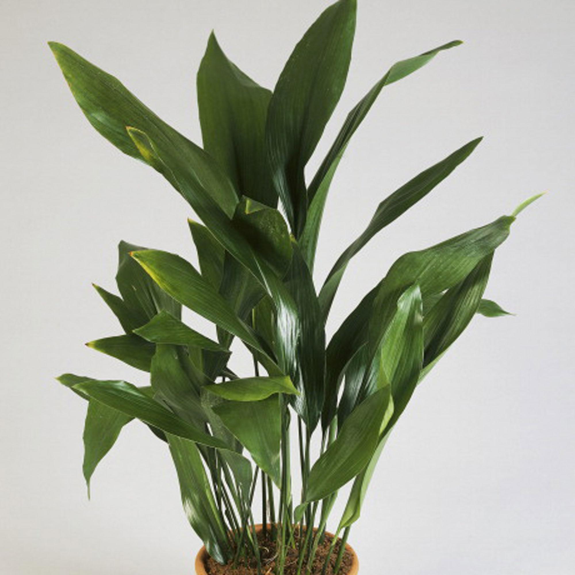 House Plant Grow Light: 10 Best Houseplants For Low Light