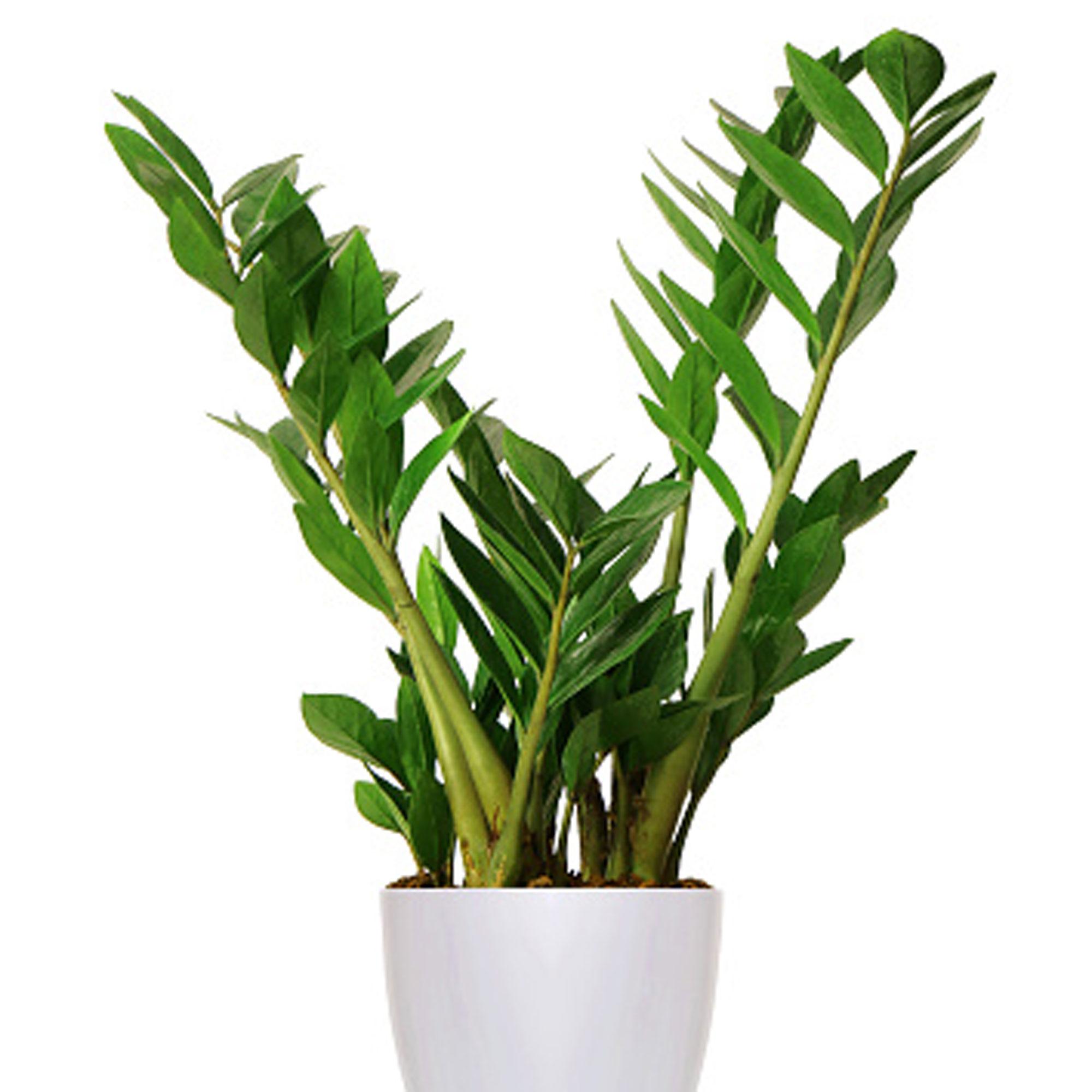 10 Indestructible Houseplants
