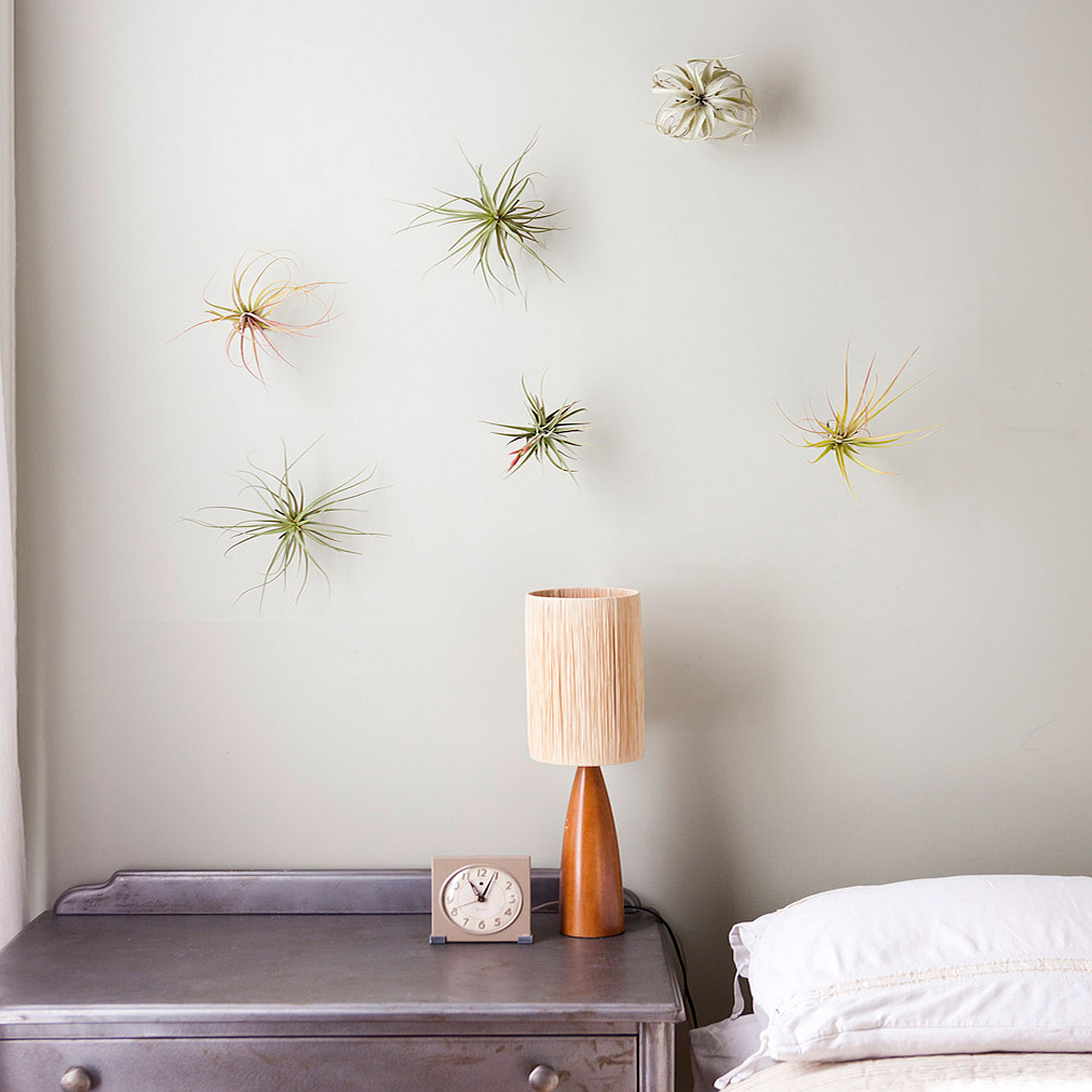 Decorating With Air Plants Sunset Sunset Magazine