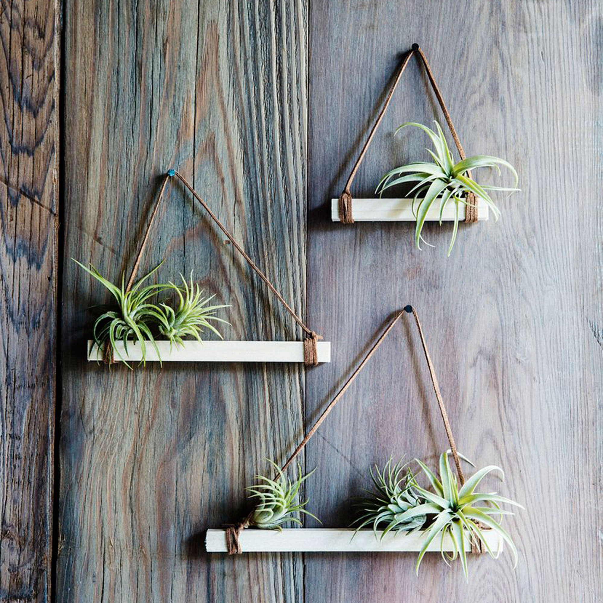 10 Ways to Decorate with Air Plants