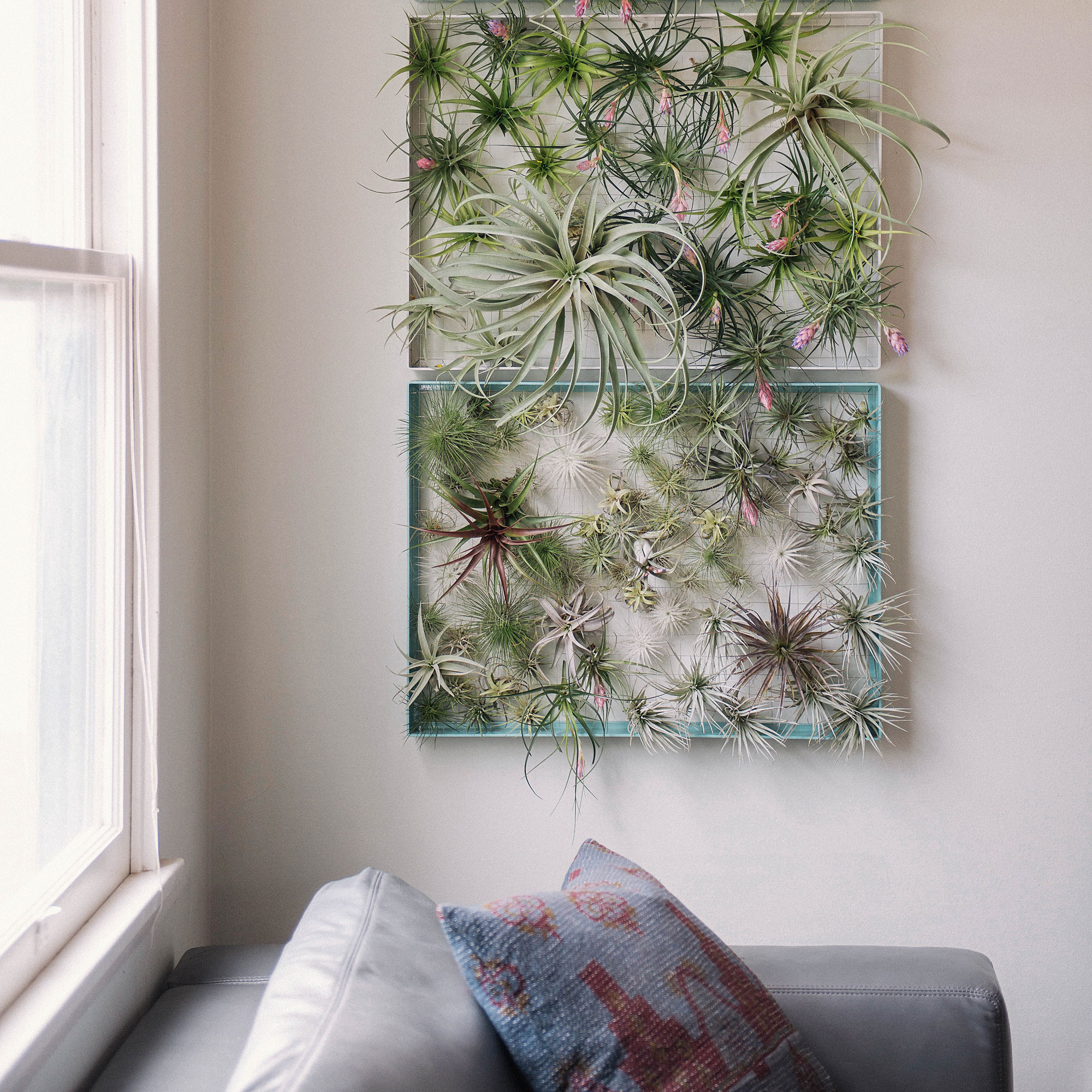 Decorating With Air Plants Sunset Sunset Magazine