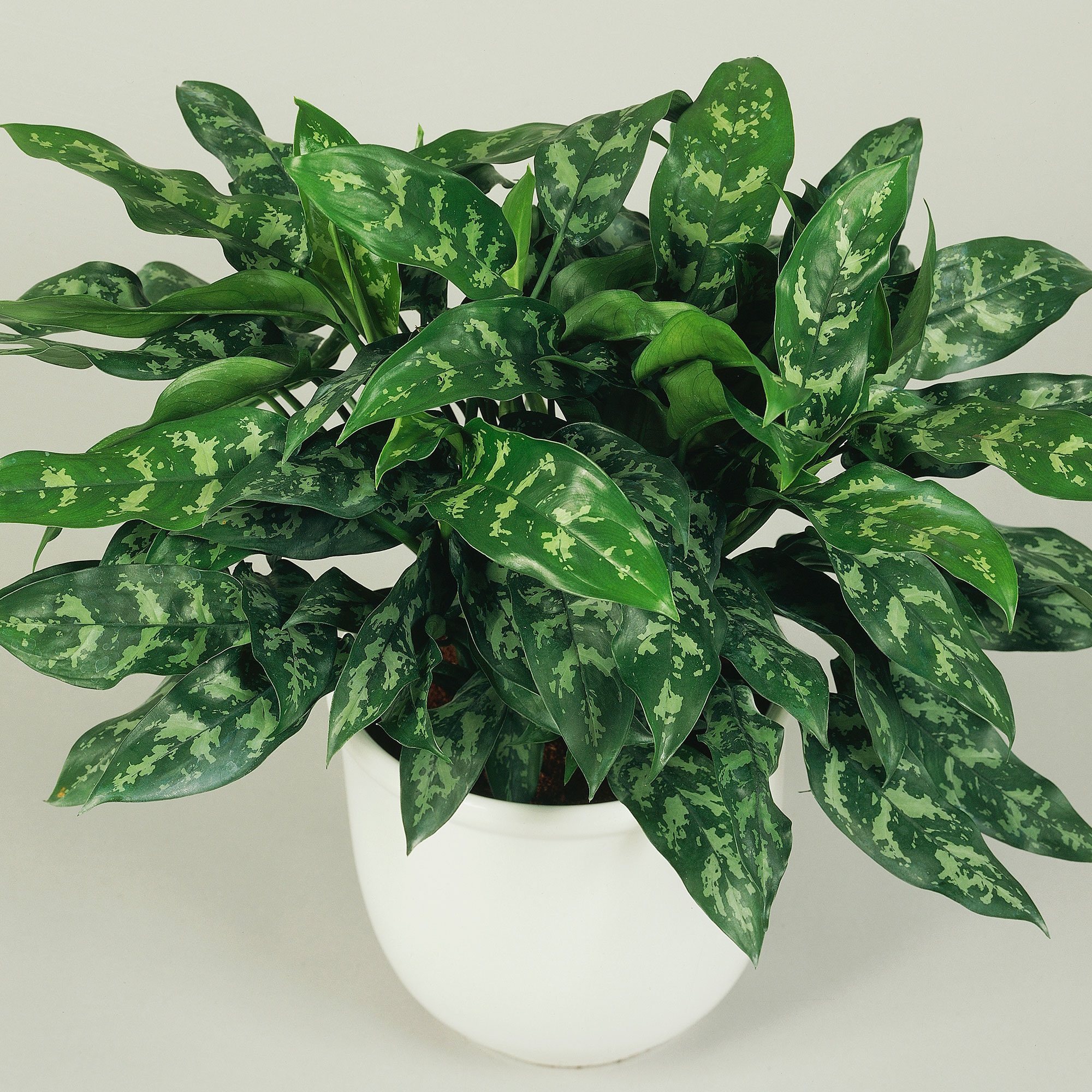 Best low light houseplants sunset magazine izmirmasajfo