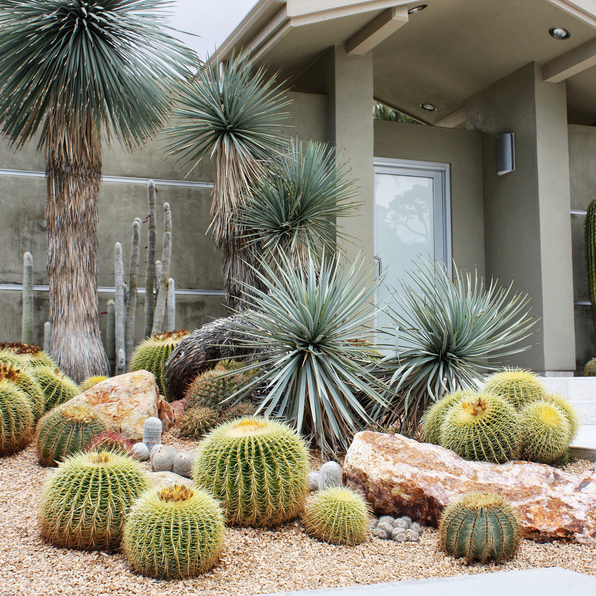 Desert Garden Ideas: Design With Cactus