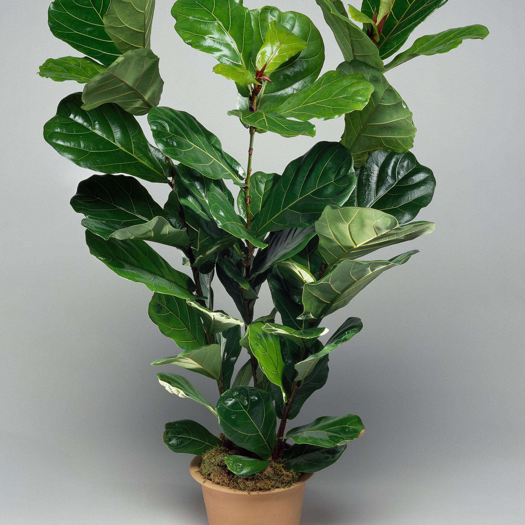 10 best houseplants for low light sunset magazine for Plants low light indoor