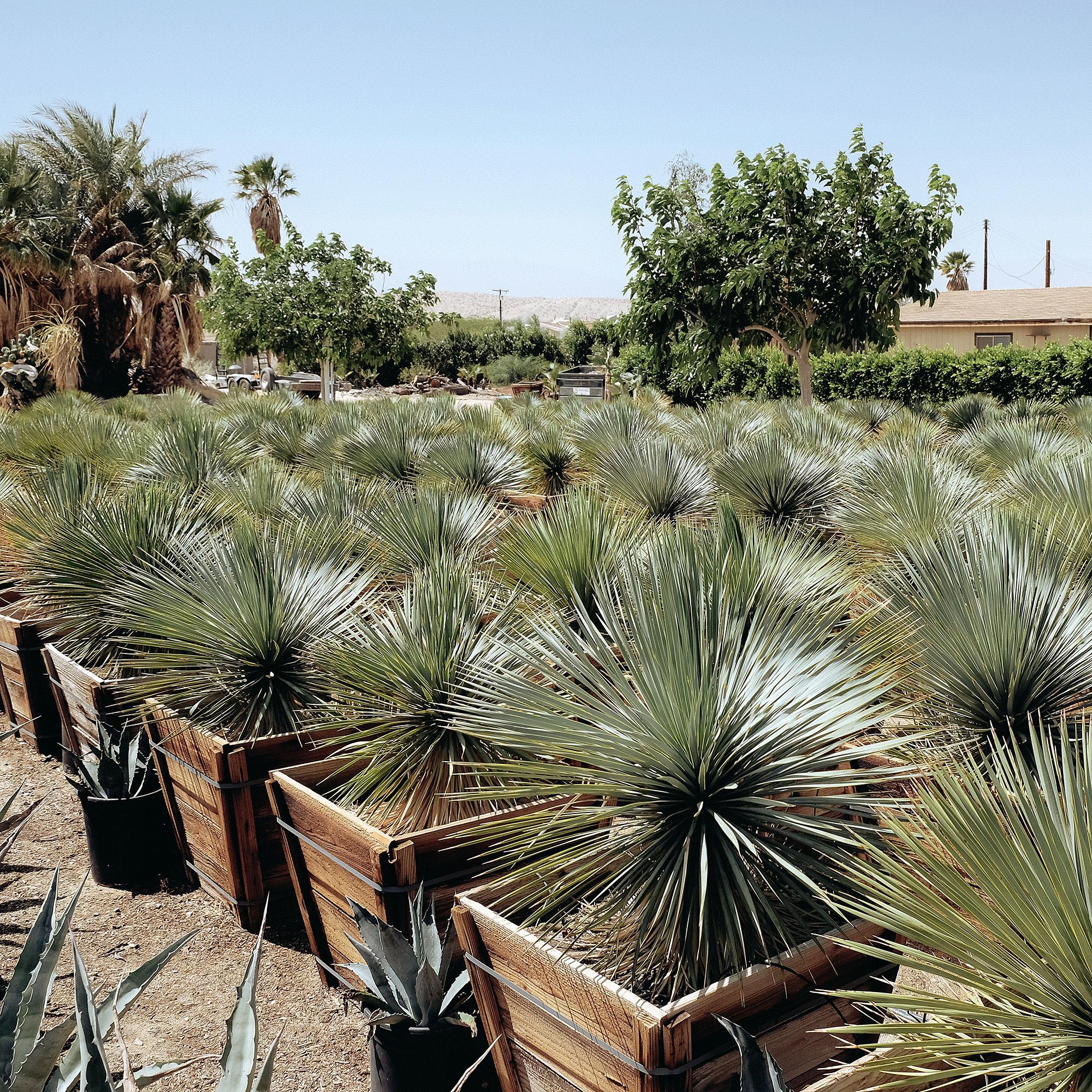 Sunland Cactus Nursery
