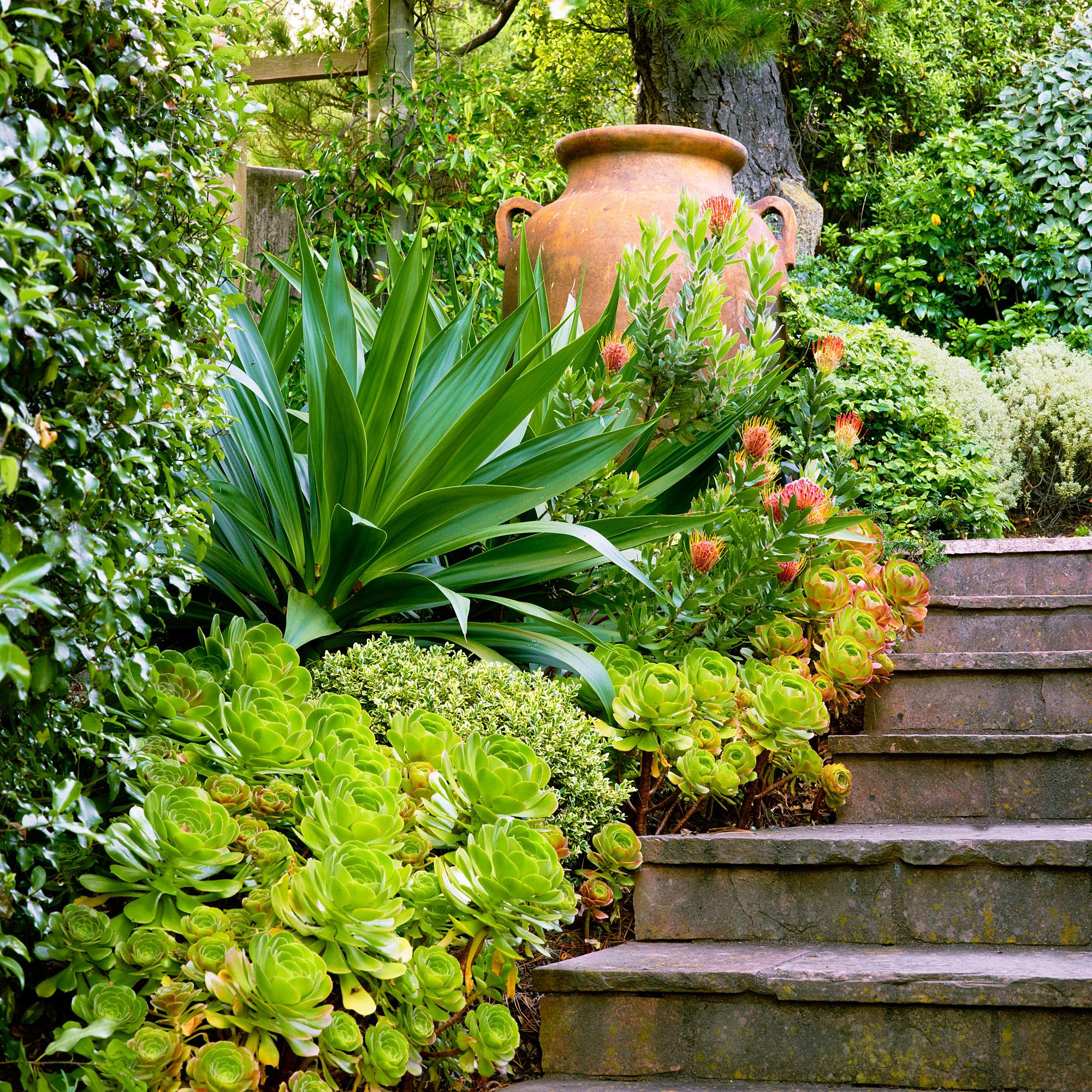 6 Lessons for Mediterranean-Climate Gardening - Sunset Magazine